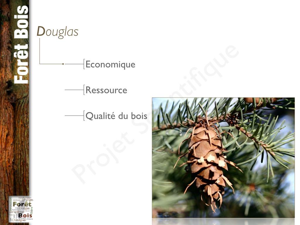 Chaire d'excellence Forêt-Bois.002